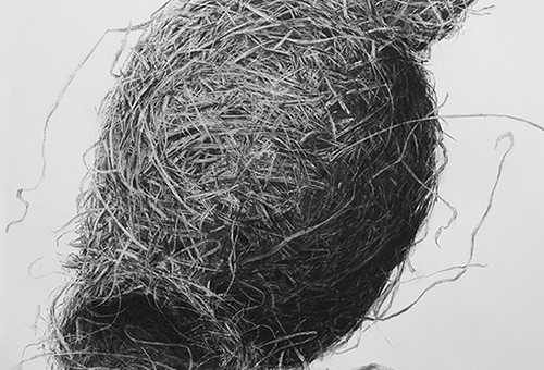Bird Nest No.5 - nature still life art by Singapore charcoal drawing artist Liu Ling