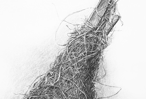 Bird Nest No.6 - detailed charcoal drawing of nature still life by Singapore contemporary artist Liu Ling