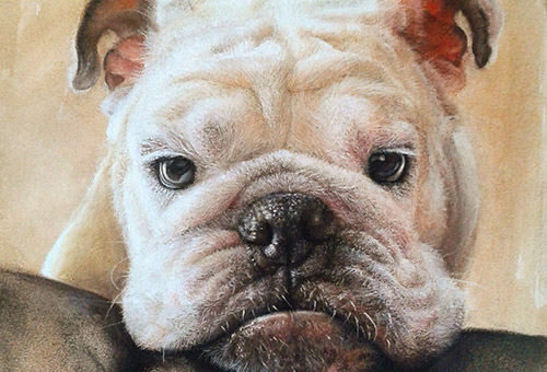 Bubu - dog portrait. pet portrait. photo-realistic animal drawing.