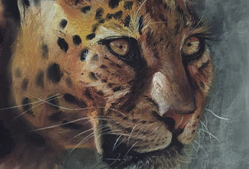 Gaze - wild life drawing art of a leopard by Singapore charcoal artist Liu Ling