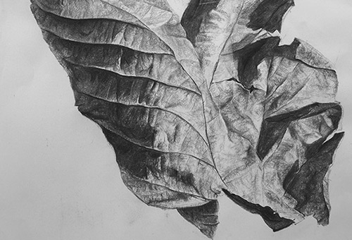 Leaf No.1 - nature art, black and white art, charcoal art, Singapore art