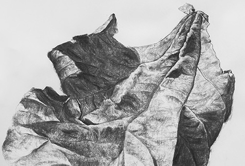 Leaf No.2 - nature drawing, black and white drawing, charcoal drawing, Singapore artwork