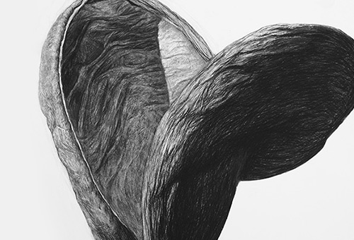 Organic Shape No.3 - charcoal drawing of a giant seed by Singapore realist artist Liu Ling