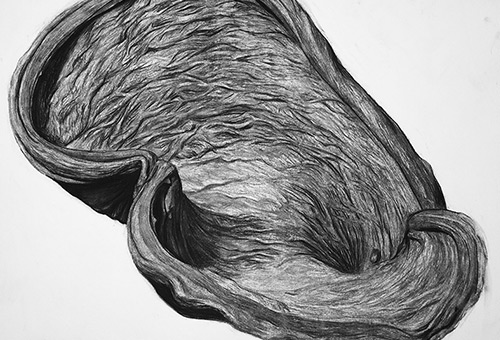 Organic Shape No.5 - black and white nature drawing by Singapore charcoal artist Liu Ling