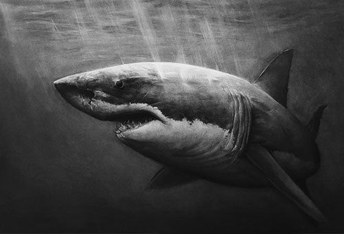 Shark - hyper-realistic charcoal drawing of a shark in the deep sea.